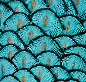 Inspiration illusion decor peacock feathers