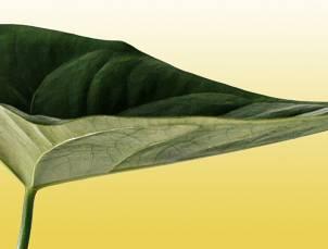 feuille-plate-verte-fond-jaune.jpg