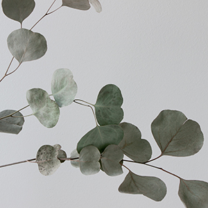 feuilles-ginkgo.jpg