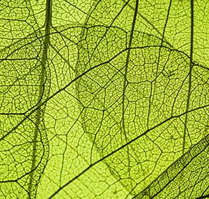 Inspiration sky earth decor leaf