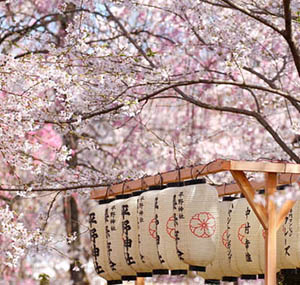 Inspiration decor flowers cherry tree Japan