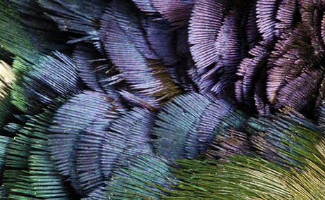 Inspiration illusion decor macro feathers